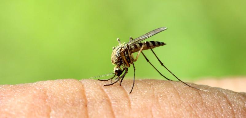 mosquito spraying chesapeake virginia