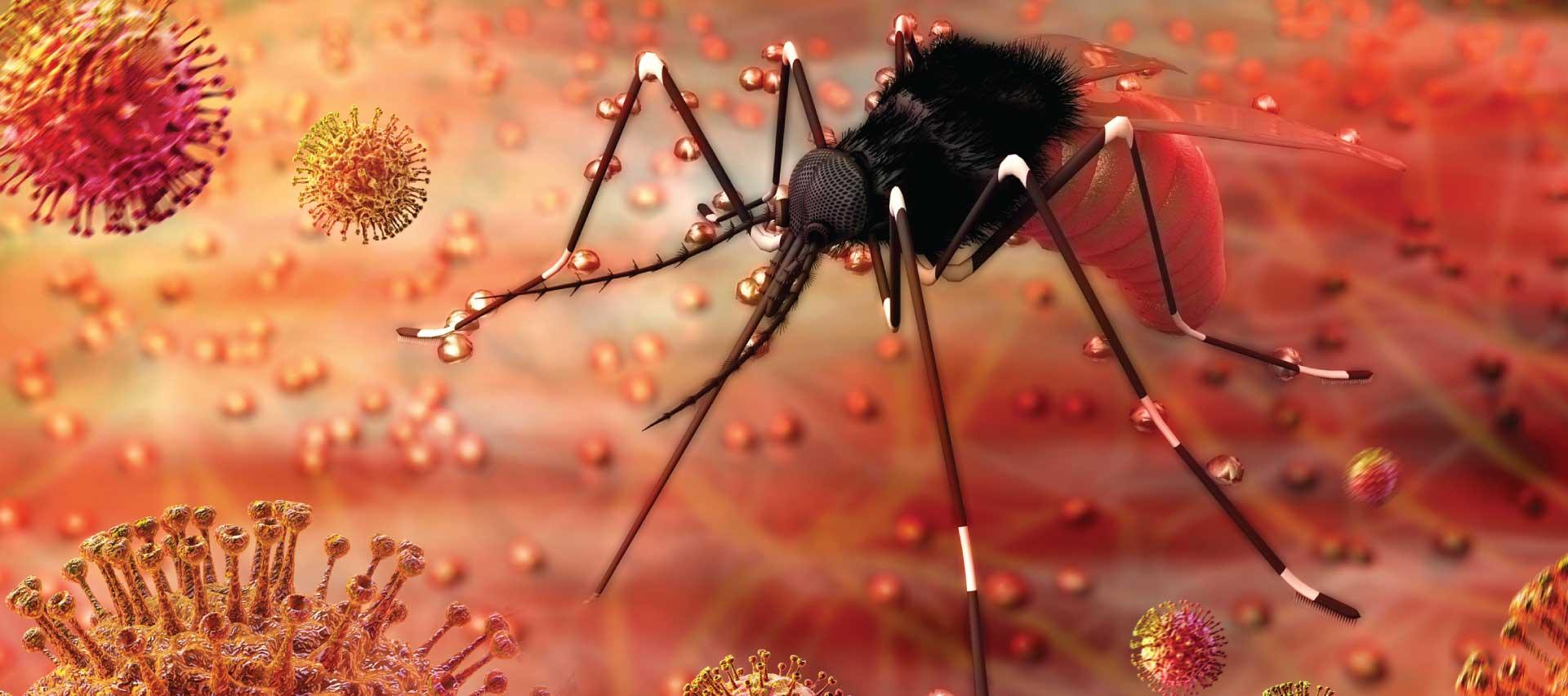 mosquito service williamsburg va